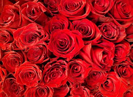赤いバラの背景の多く。写真を閉じます。 写真素材