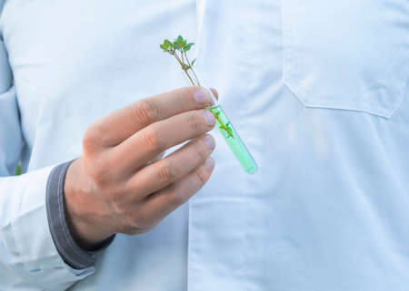 Hand of a researcher in a white coat showing test tube with green sprout. Standard-Bild - 149658243