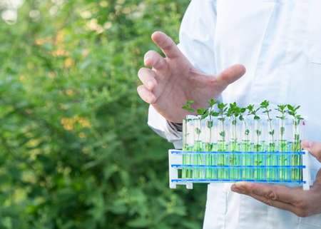 Researcher in a white coat showing test tubes with green sprouts. 免版税图像