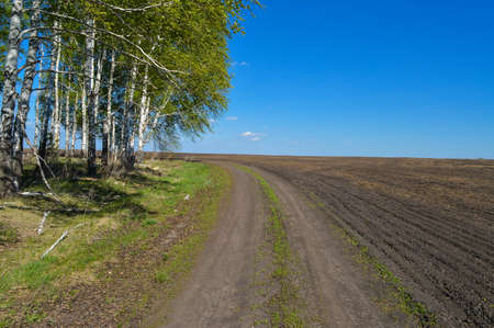 plowing: Country road in a field near the forest on a sunny day. Summer Landscape Stock Photo