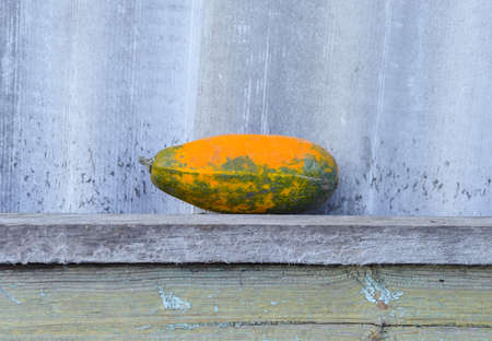 Yellow vegetable marrow on a wooden bench. The concept of farm and household