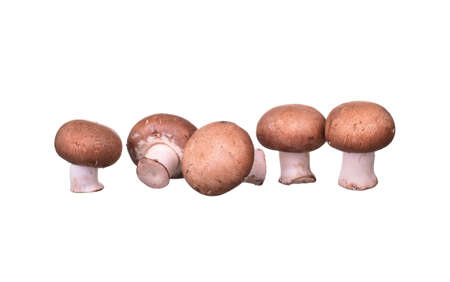 Composition with mushrooms isolated on white