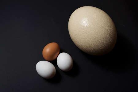 Ostrich and chicken egg on black background Stok Fotoğraf