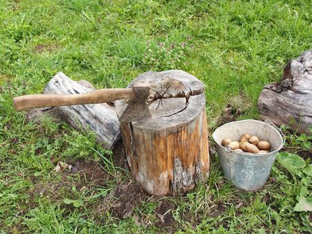 vegetable garden bucket potato axe stump