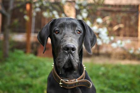 Dog, back yard, garden, summer, animal, domestic pet.