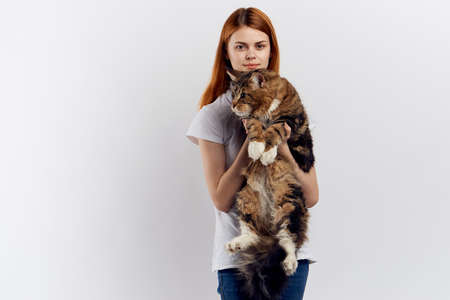 Woman holds a maine coon cat on her hands on a light background. Stock Photo