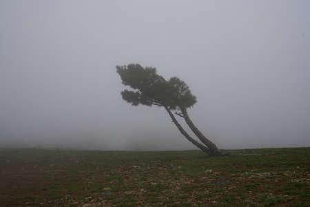 Tree, fog, wind, mountains, nature, beauty, evening.