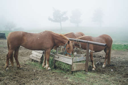 horses graze and eat in the mountains.