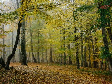 Forest trees nature landscape travel leaves Standard-Bild