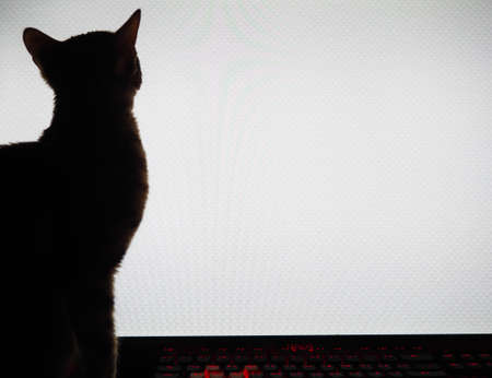 Silhouette of a cat on the background of a computer monitor