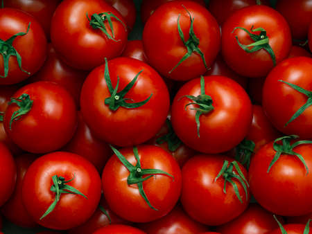 Background of red ripe liquid tomatoes with green leaves in full screen. Texture of oriental greenhouse large vegetables in market, store. Close-up, top view, food wallpaper. Concept of harvesting.