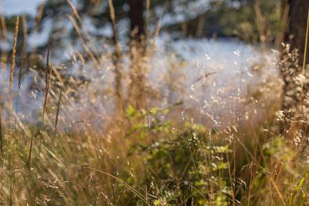 grass macro Фото со стока