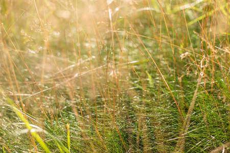 Grass. Sunset.