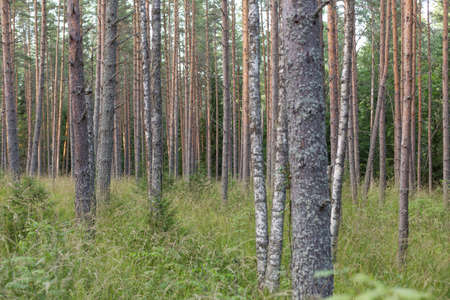 Forest on Valaam Stock Photo - 85751262