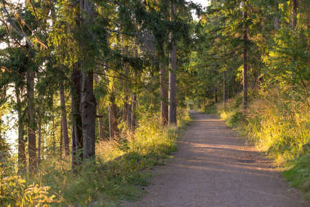 Forest road on Valaam