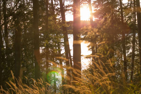 Valaam forest Stock Photo - 86026184