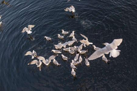Gulls flying Stock Photo