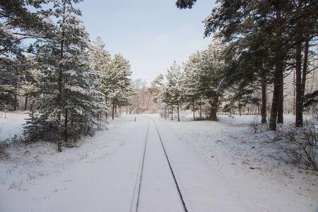 Rural landscape.Winter railway through snowy pines in park