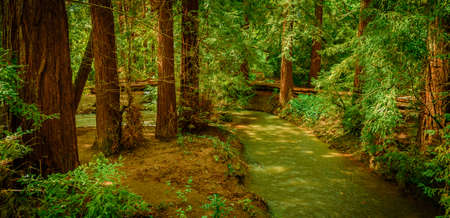 Walking in the wood in the heart of bay area you can see many miracles. Like this one small creek in the wood. This place is so beautiful and peaceful, you can spend many hours seating on the bank of this creek.