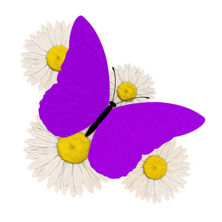 purple butterfly with four chamomile photo