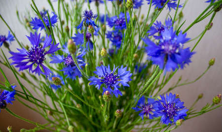Bouquet of cornflowers on a beautiful white background. Concept image.