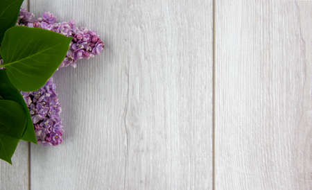 Lilac branch on beautiful wooden table. Concept. Beautiful background, copy space.