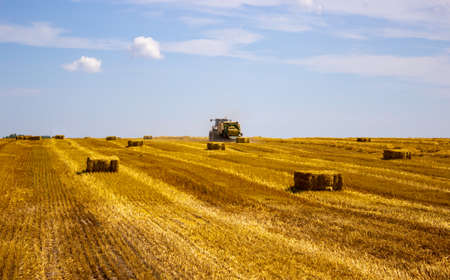 A tractor uses a trailed bale machine to collect straw in the field and make round large bales. Agricultural work, baling, baler, hay collection in the summer field.