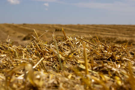 Straw roll bale with crop field, photovoltaic panel and blue sky in background. Enregy, food. 免版税图像