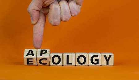 Apology to ecology symbol. Hand turns cubes and changes word 'ecollgy' to 'apology'. Beautiful orange background, copy space. Business and apology to ecology concept.