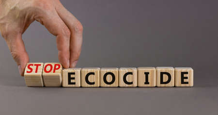 Stop ecocide symbol. Businessman turns wooden cubes and changes words ecocide to stop ecocide. Beautiful gray background, copy space. Business, ecological and stop ecocide concept.