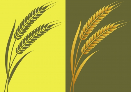 Ears of wheat in illustration on the local background Vector