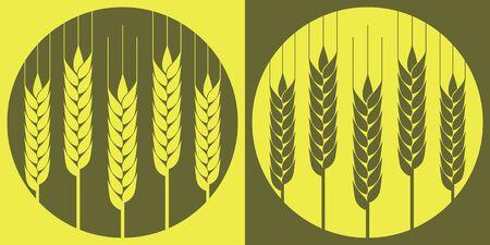 Espigas de trigo en el vector en el fondo local