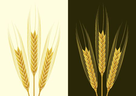 Ears of wheat in the vector on the local background Stock Vector - 14636765