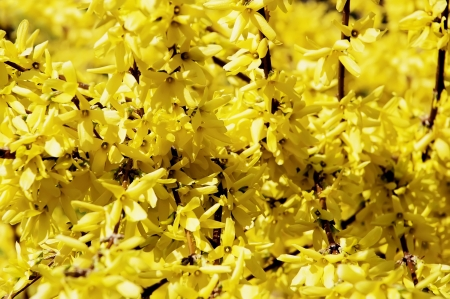 colorfully: Nature background - colorfully yellow flowers Stock Photo