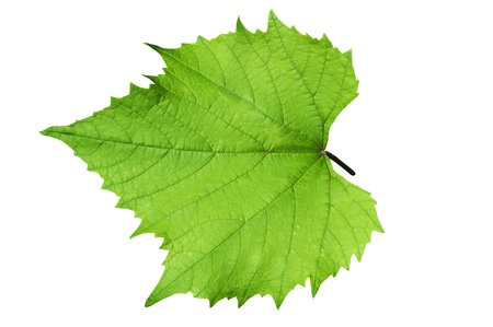 Green grape leafs, isolated over white