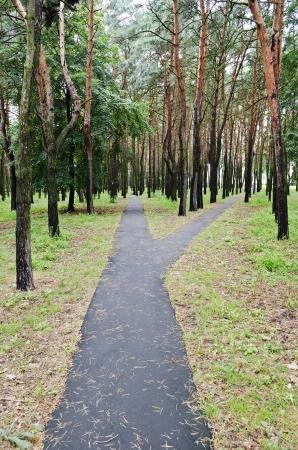 Divarication Asphaltbahn in einem Pinienpark
