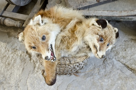 Two evil fox sitting in the basket Stock Photo - 18057832