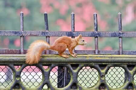 Squirrel on a fence in a park Stock Photo - 18124892