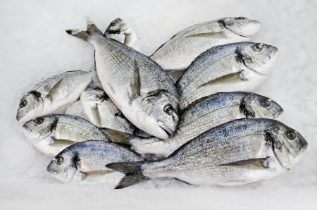 gilthead bream: Fresh gilt-head bream or dorado fish, lying in the ice