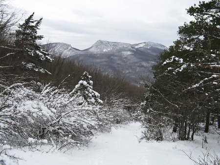Beautiful landscape - Winter forest in the Crimean mountains photo