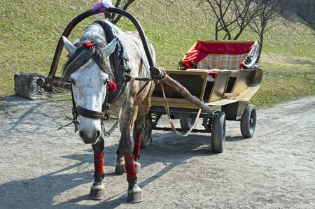 lvov: Horse harnessed to a cart in Olesko . Lvov, Ukraine Stock Photo