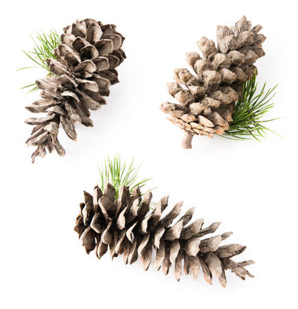 pine three: Isolated cedar cone with small branch, few views in one composition