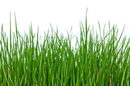 Green and lush grass on white background, horizontal composition Stock Photo