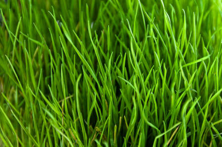 Green and lush grass close-up, bright and vibrant pattern Stock Photo