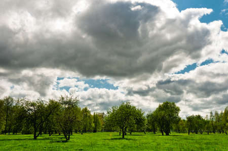 cirrus: Meadow with big, cirrus and fluffy clouds on background