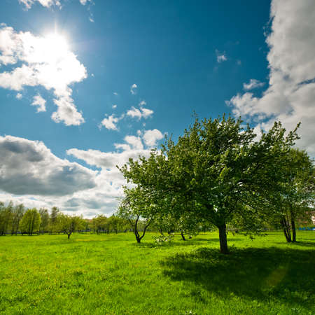 Tree on meadow with bright sun in wood at day time landscape