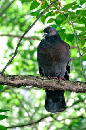 Pigeon sitting on thick tree branch with leafs on background