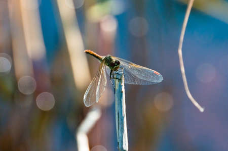 Dragonfly sits on old wooden stem with blurry background