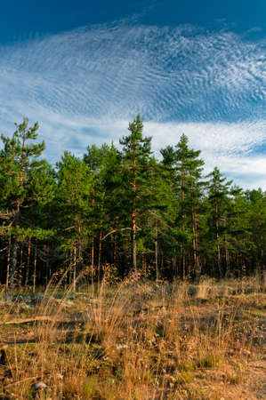 Forest outskirts at morning time with beautiful cloudscape