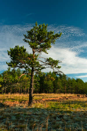 marge: Lonely tree at forest outskirts with beautiful cloudscape Stock Photo